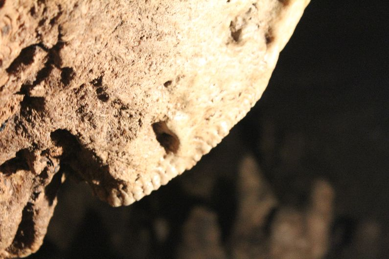 Teeth-like formation in cave