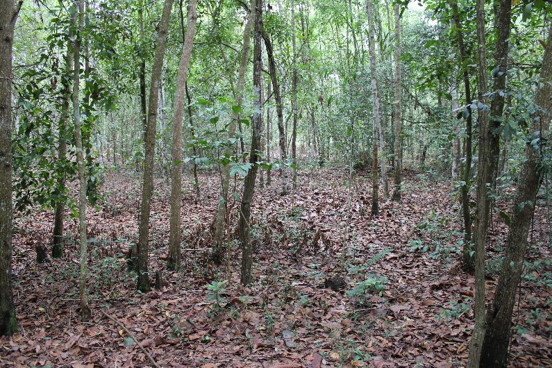 The woods where the Cu Chi tunnels are