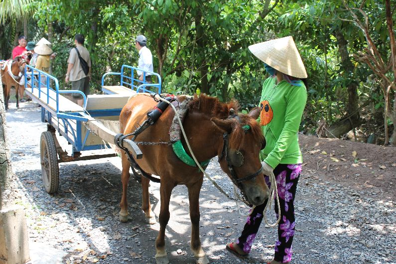 Experience the *real* Mekhong Delta by taking a horse and cart!!