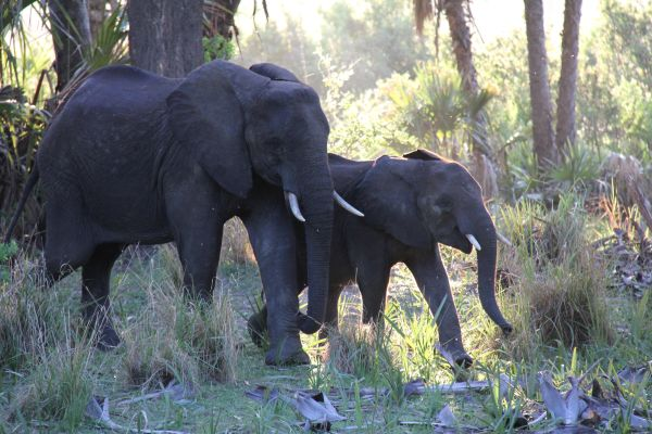 This photo was taken from the dining area at Lake Manze Camp. Elephants wandering past was common but always special.